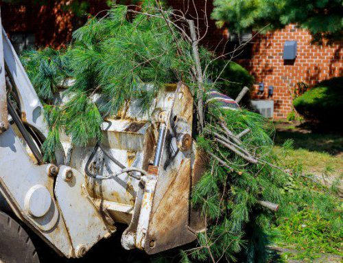 Tree Removal Company: Creating New Customers in Salesforce and MWP